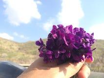一束花在手中 库存图片