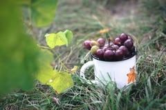 一束葡萄在一个白色杯子的在草 库存照片