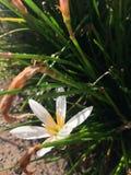 一束酥脆白花在阳光下 免版税库存图片