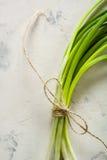 一束绿色春天葱栓与在轻的石背景的一条绳索 免版税库存图片