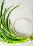 一束绿色春天葱栓与在轻的石背景的一条绳索 库存图片