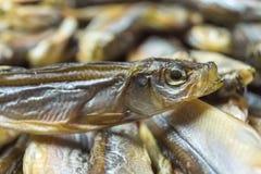 一条一点干鱼的头,关闭  免版税库存图片