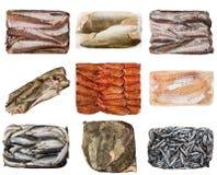 一条不同的结冰的鱼的套 免版税库存图片