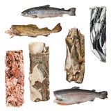 一条不同的结冰的鱼的套 库存图片