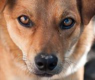 一条不纯血统狗的纵向 免版税库存照片
