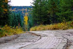 一条临时通入席子路通过森林 库存图片