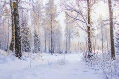 一条乡下公路在瑞典冬天 库存图片