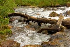 一条产金的小河在北不列颠哥伦比亚省 库存图片
