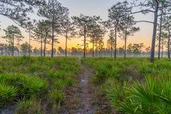 一条供徒步旅行的小道在日出的中央佛罗里达 库存照片