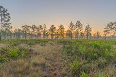 一条供徒步旅行的小道在日出的中央佛罗里达 图库摄影