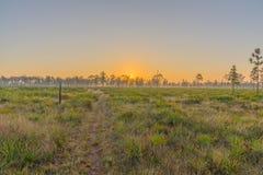 一条供徒步旅行的小道在日出的中央佛罗里达 库存图片