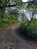 一条供徒步旅行的小道通过一个热带森林 免版税库存图片