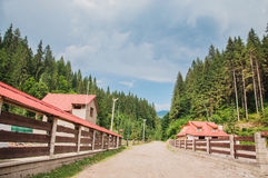 一条农村路在森林里 免版税图库摄影