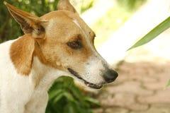 一条友好的街道狗 免版税库存图片