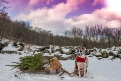 一条可爱的圣诞节狗 免版税库存照片
