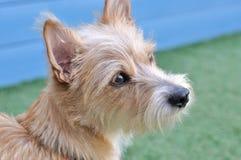 一条可爱的狗的纵向 免版税库存照片