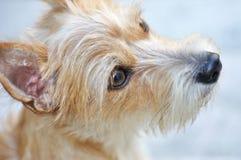 一条可爱的狗的纵向 免版税图库摄影