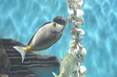 一条可爱的鱼在公园 库存照片