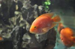 一条可爱的鱼在公园 免版税库存图片
