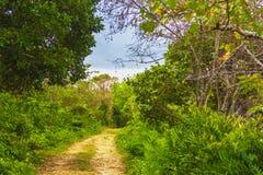 一条土路在密林 免版税图库摄影