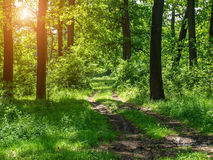 一条土路在森林 免版税库存照片