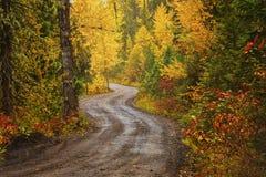 一条土路在秋天的一个森林里 库存图片