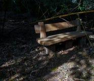 一条坐的长凳在有全部的一个公园在它附近的树 库存图片