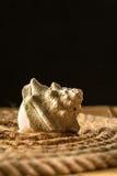 一条壳和绳索在木背景 库存图片