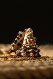 一条壳和绳索在木背景 免版税库存图片