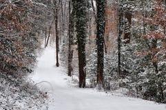一条多雪的道路穿过森林 库存图片