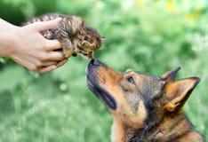 一条大狗和一只小的小猫 库存图片