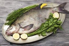 一条大活鲂河鱼钓鱼说谎在a在铁盘子有刀子和切片的柠檬和用盐莳萝 库存照片