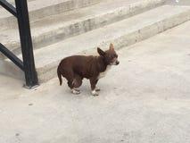 一条失去的病的狗 免版税图库摄影