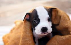 一条孤独的幼小狗 免版税图库摄影