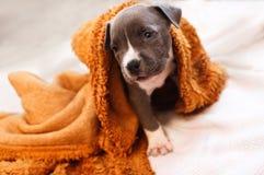 一条孤独的幼小狗 免版税库存图片