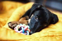 一条孤独的狗的纵向 库存图片
