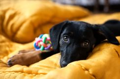 一条孤独的狗的纵向 免版税图库摄影