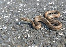 一条孤独的蛇 图库摄影