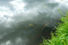 一条安静的森林河的表面 图库摄影