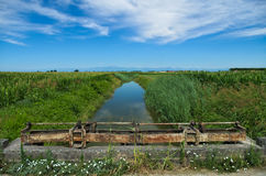 一条安静的河的夏天视图威尼斯式平原的 库存图片