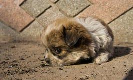 一条害羞的小狗 库存照片