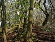 一条小供徒步旅行的小道通过春天风景的森林 免版税库存照片