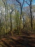 一条小供徒步旅行的小道通过森林画象 免版税库存图片