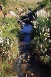 一条小国家小河 库存照片