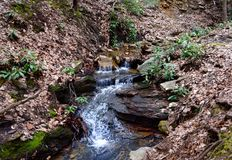 一条小小河在春天标示用野生杜鹃花植物 免版税库存图片