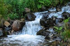 一条小小河流经森林 库存图片