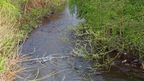 一条小平安的小河在春天 股票录像