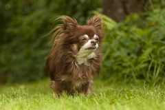 一条小有来历狗坐绿色草 库存图片