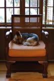 一条小棕色狗在椅子睡觉 库存图片