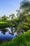 一条小森林河的绿色岸在落日的光芒的早期的春天晚上 库存图片